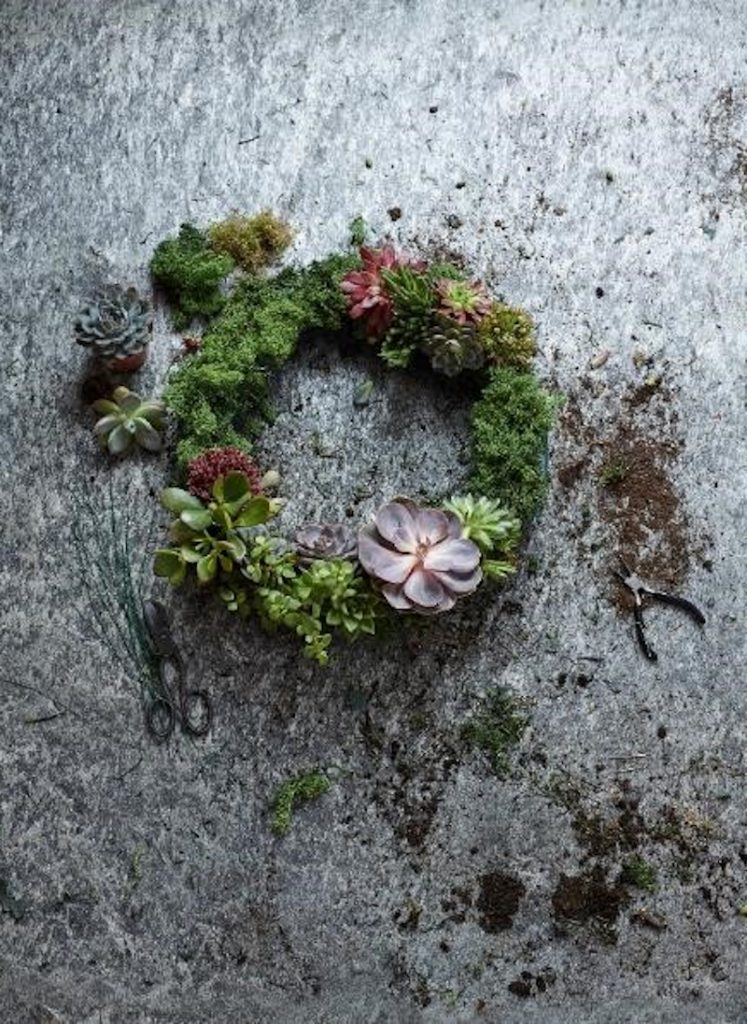 Making succulent wreath